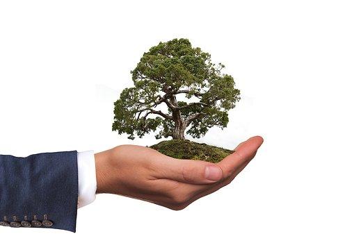 ambiente_pianta nel palmo